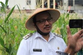 Panen bersama Wakil Walikota Yogyakarta, Dulu Lahan Tidur kini jadi Kebun Sayur